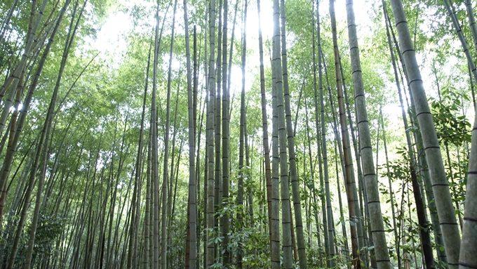 山の神さん 竹藪