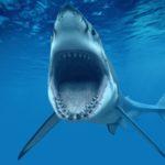 サメガイ通り サメを飼ってるの?