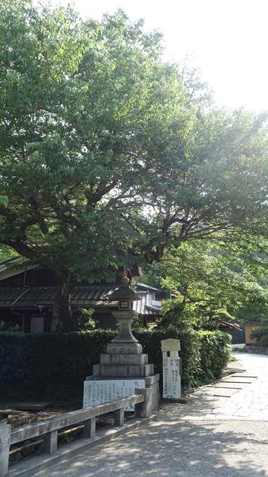 大豊神社 哲学の道の桜