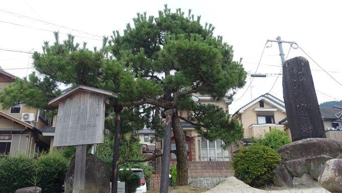 一条寺下り松 No2