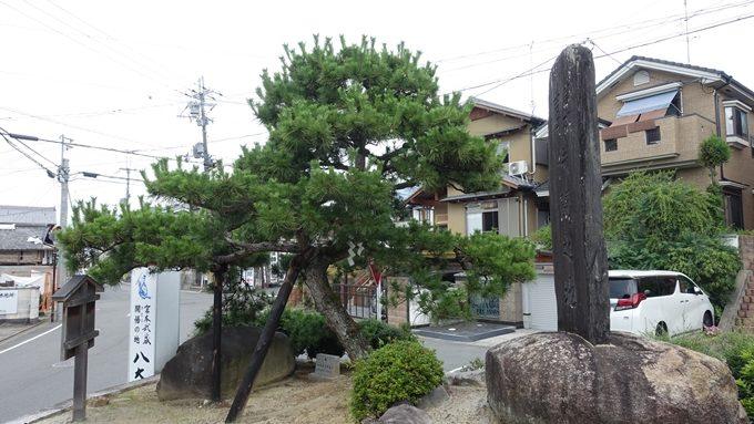 一条寺下り松 No4