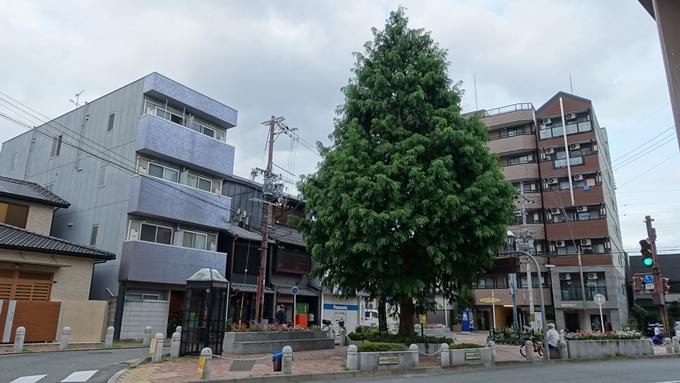 北野下り松 No2