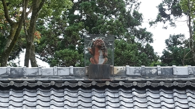 赤山禅院 お猿No1