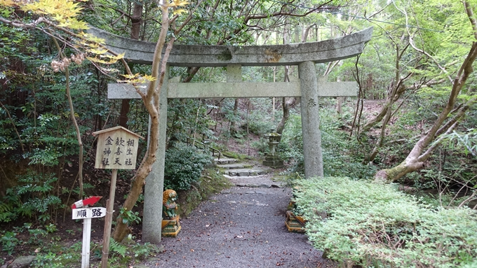 赤山禅院 No11