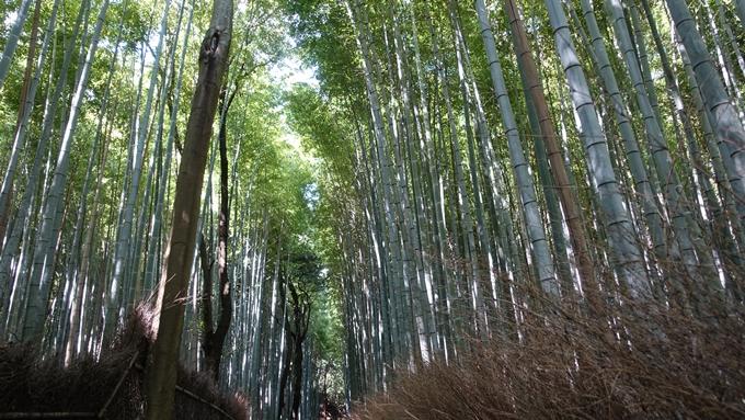 御髪神社 No2