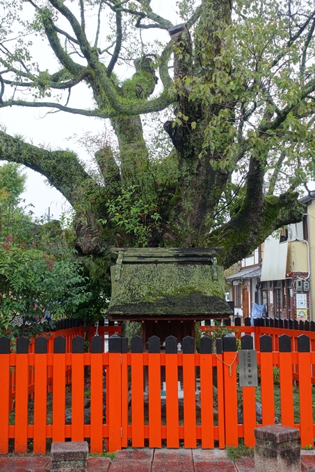 藤木神社 No8