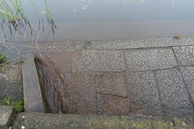 深泥池 No11