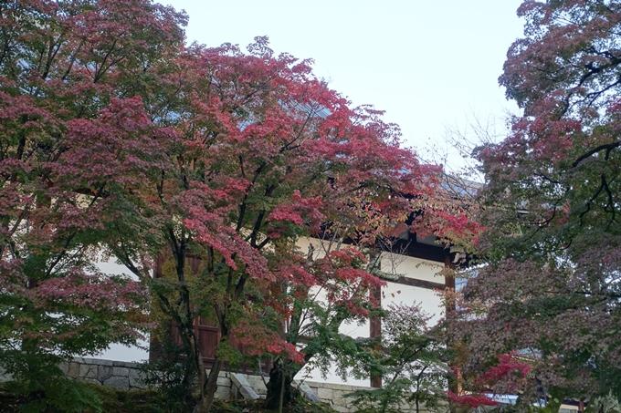 京都紅葉速報_04 No3