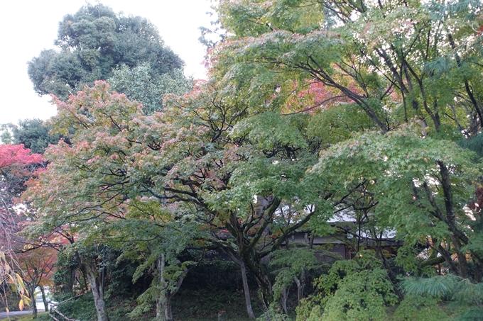 京都紅葉速報_04 No15