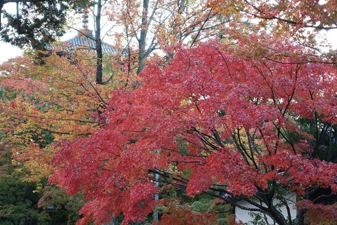 京都紅葉速報_04 No25