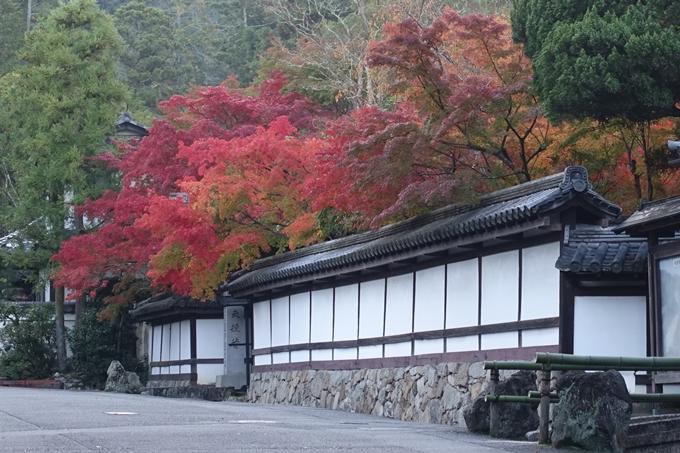 京都紅葉速報05 No3