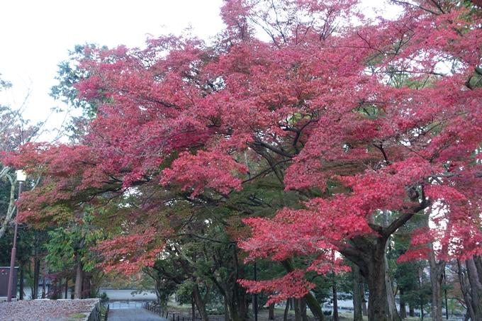 京都紅葉速報05 No10
