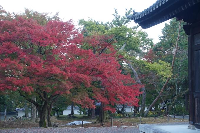 京都紅葉速報05 No11