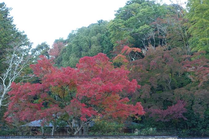 京都紅葉速報05 No23