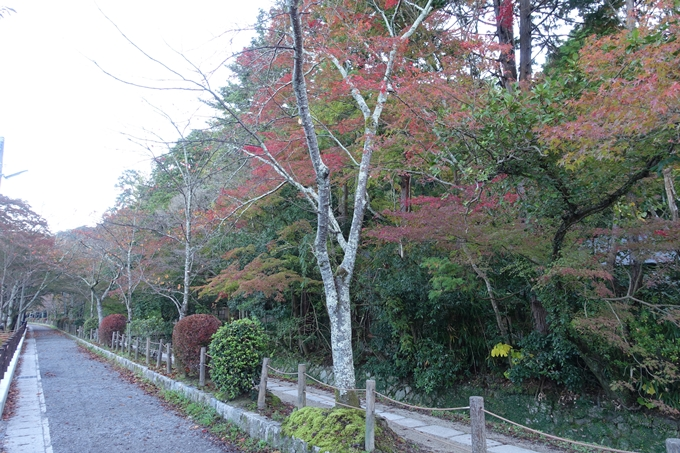 京都紅葉速報05 No24