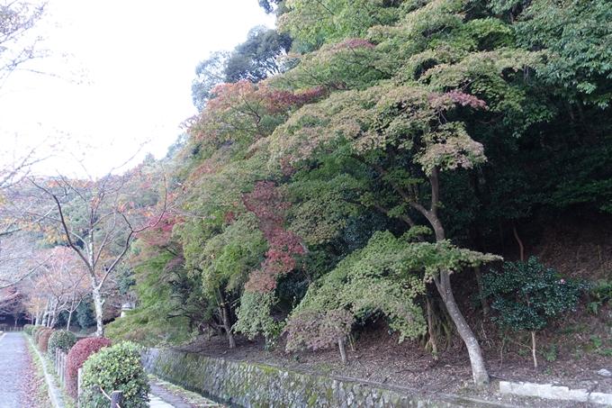 京都紅葉速報05 No27