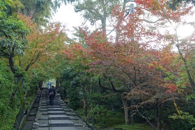 京都紅葉速報_06 No15