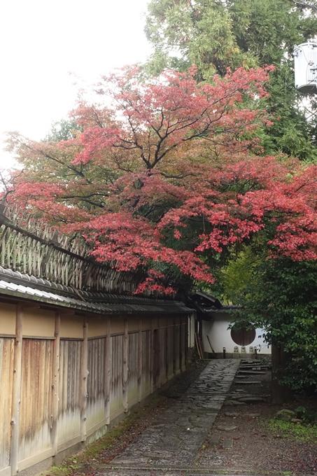 京都紅葉速報_06 No21