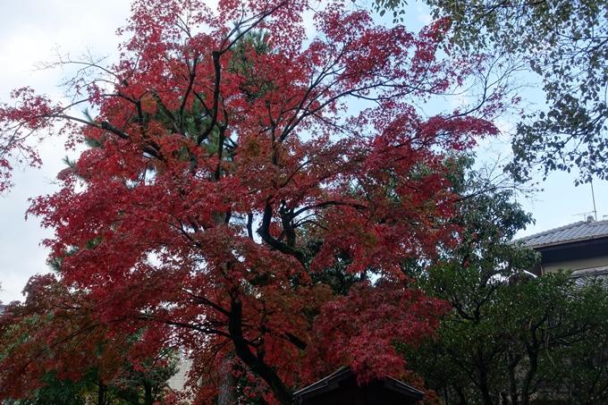 京都紅葉速報_06 No33