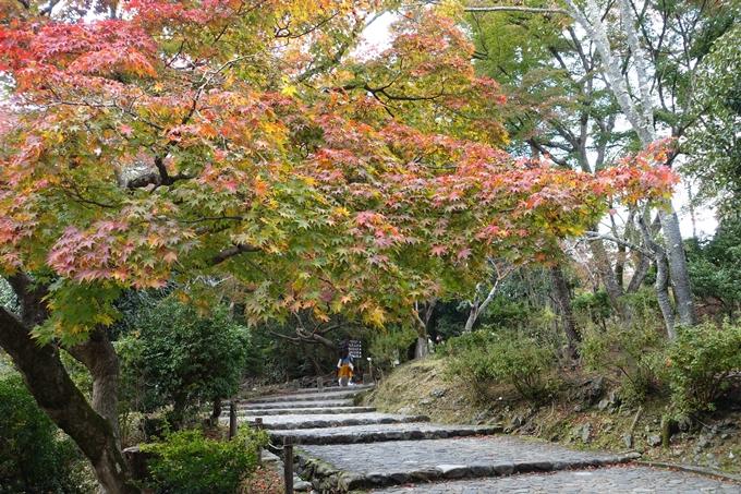 京都紅葉速報_08 No6