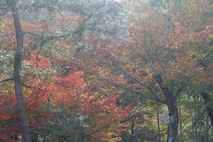 京都紅葉速報_08 No15