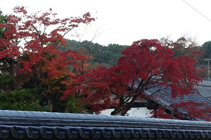 京都紅葉速報_10 No14