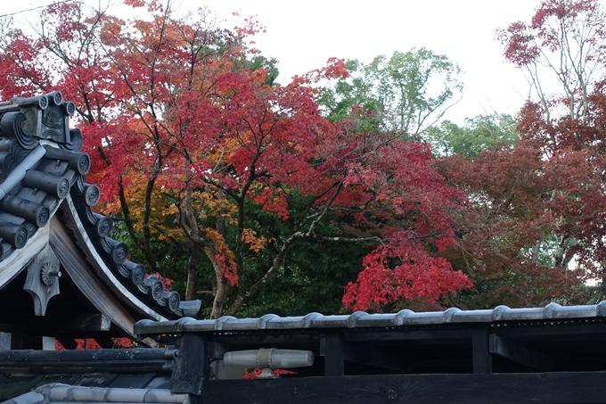 京都紅葉速報_10 No20