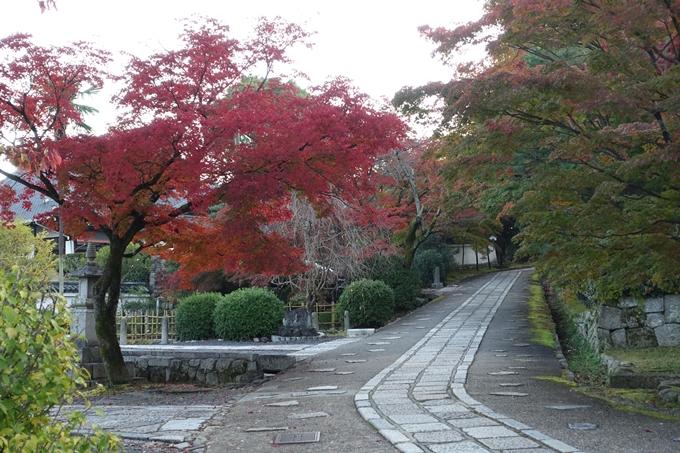 京都紅葉速報_10 No29