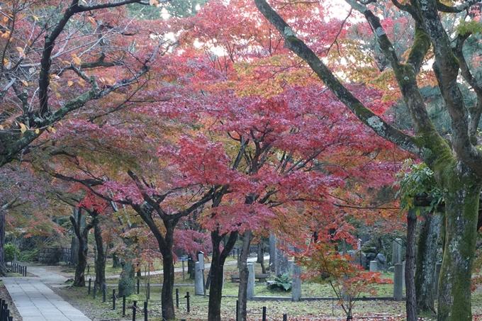 京都紅葉速報_10 No33