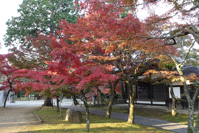 京都紅葉速報_10 No45