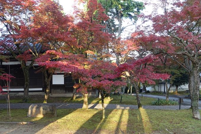 京都紅葉速報_10 No49