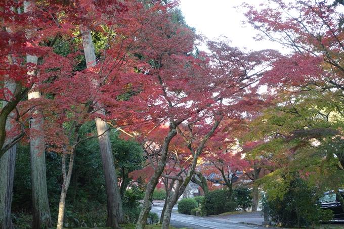 京都紅葉速報_10 No51