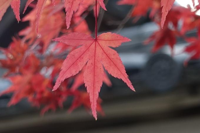 京都紅葉速報_10 No52