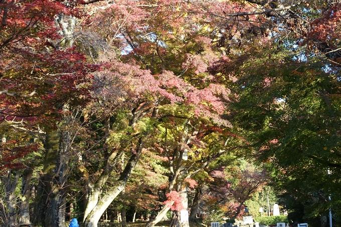 鷺森神社 No10