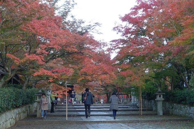 京都紅葉速報_12 No41