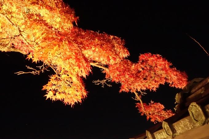 大覚寺 真紅の水鏡_No11