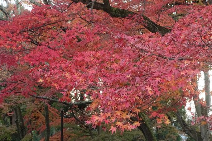 京都紅葉速報_14 No17