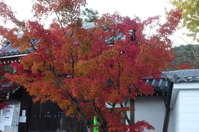 京都紅葉速報_14 No19