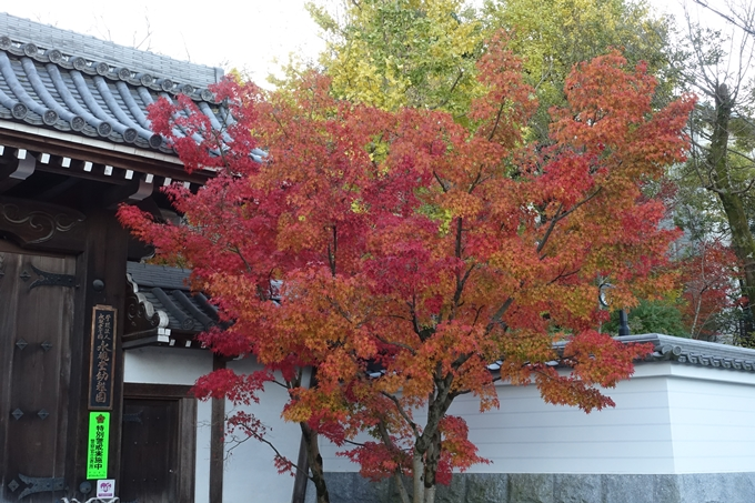 京都紅葉速報_14 No20