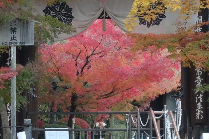 京都紅葉速報_14 No26