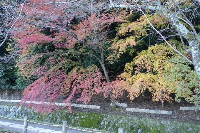 京都紅葉速報_14 No37