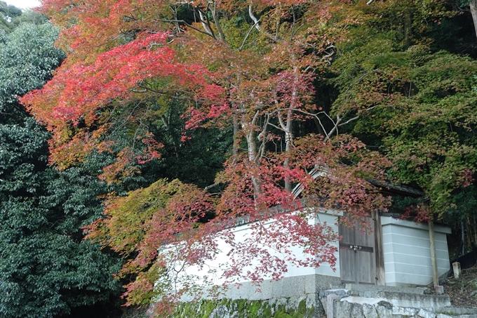 京都紅葉速報_14 No42