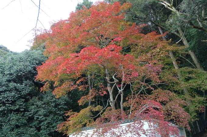 京都紅葉速報_14 No43