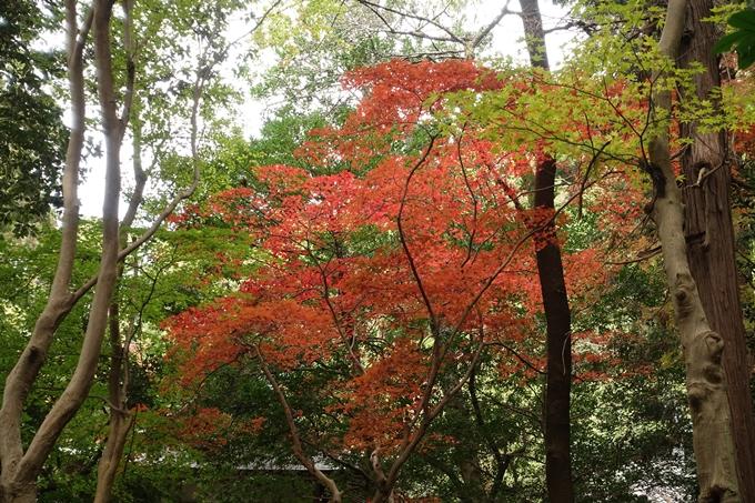 鷺森神社 No40