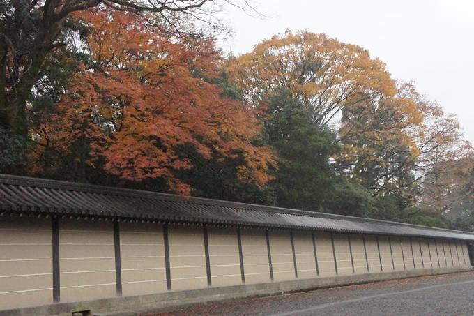 京都御苑 紅葉 No7