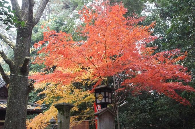 京都御苑 紅葉 No16