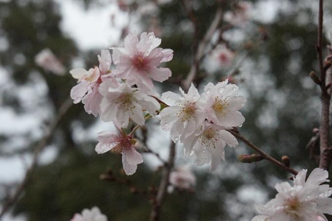 京都御苑 紅葉 No21
