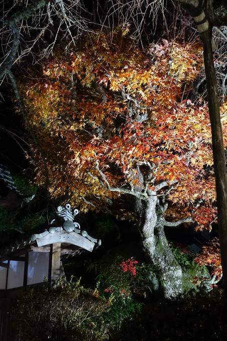 京都・丹波 夢ナリエ No57