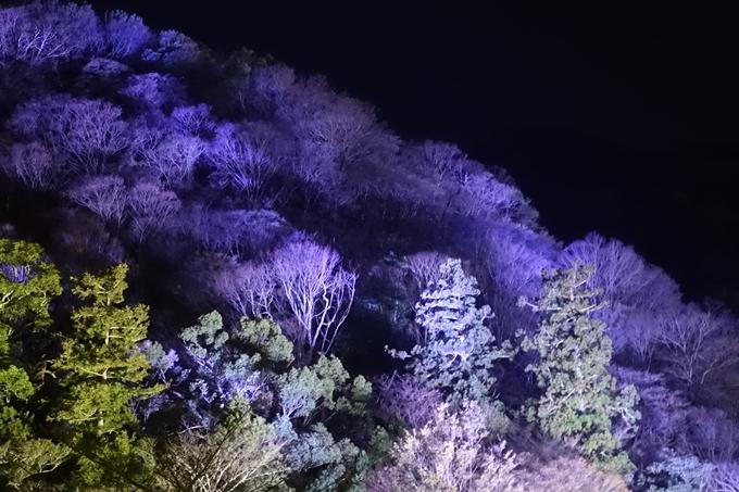 嵐山花灯路_2017_01 No8