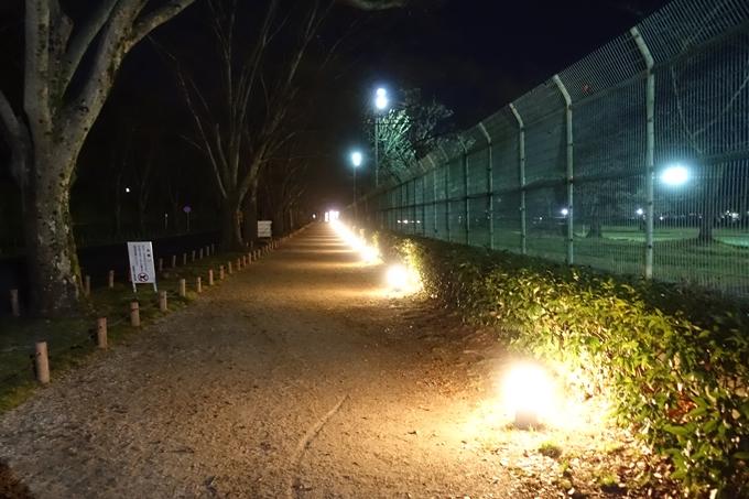 京都府立植物園_イルミネーション No2